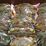 Cool Springs Fish Bar & Restaurant Dover, DE